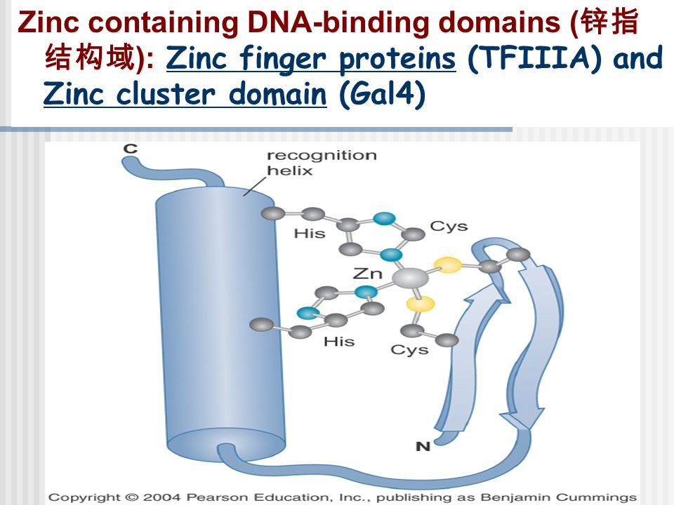 Zinc containing DNA-binding domains (锌指结构域): Zinc finger proteins (TFIIIA) and Zinc cluster domain (Gal4)