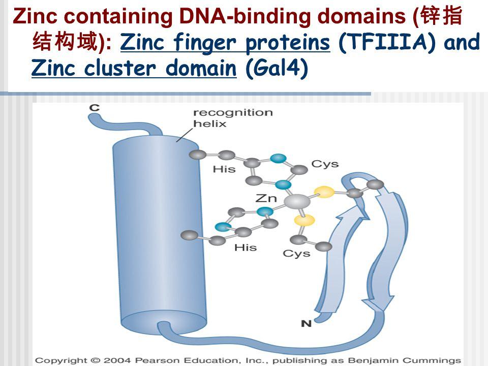 Zinc containing DNA-binding domains (锌指结构域): Zinc finger proteins (TFIIIA) and Zinc cluster domain (Gal4)