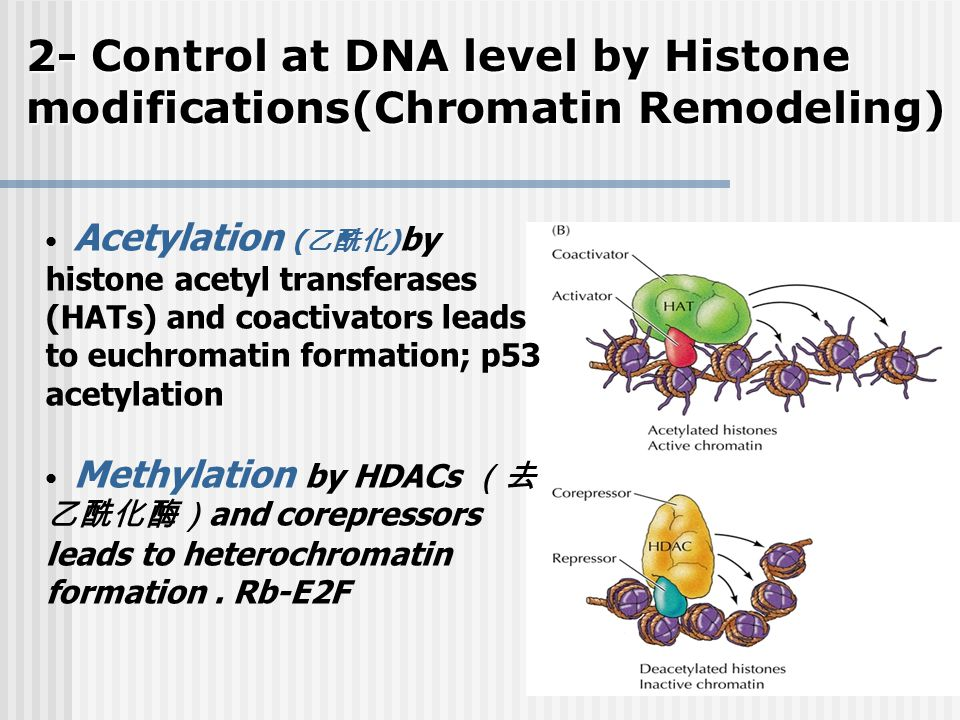 2- Control at DNA level by Histone modifications(Chromatin Remodeling)