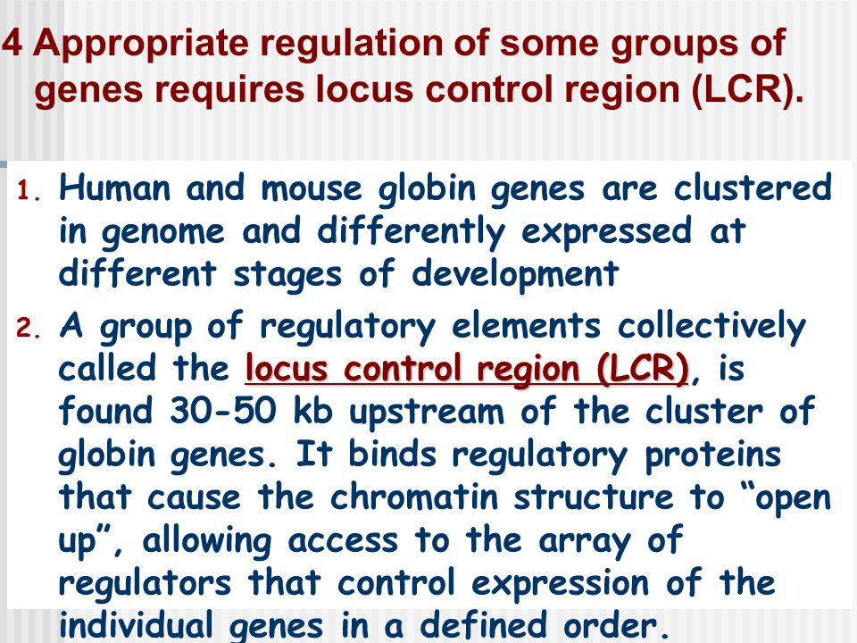 4 Appropriate regulation of some groups of genes requires locus control region (LCR).