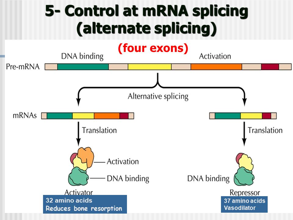 5- Control at mRNA splicing (alternate splicing)