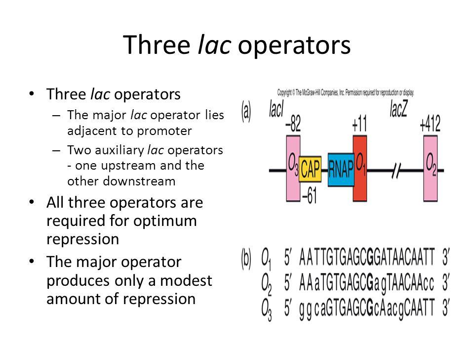 Three lac operators Three lac operators