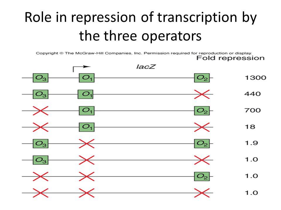 Role in repression of transcription by the three operators