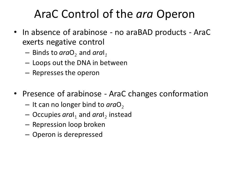 AraC Control of the ara Operon