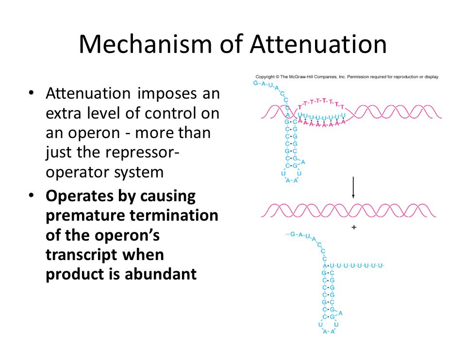 Mechanism of Attenuation