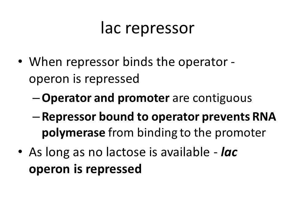 lac repressor When repressor binds the operator - operon is repressed