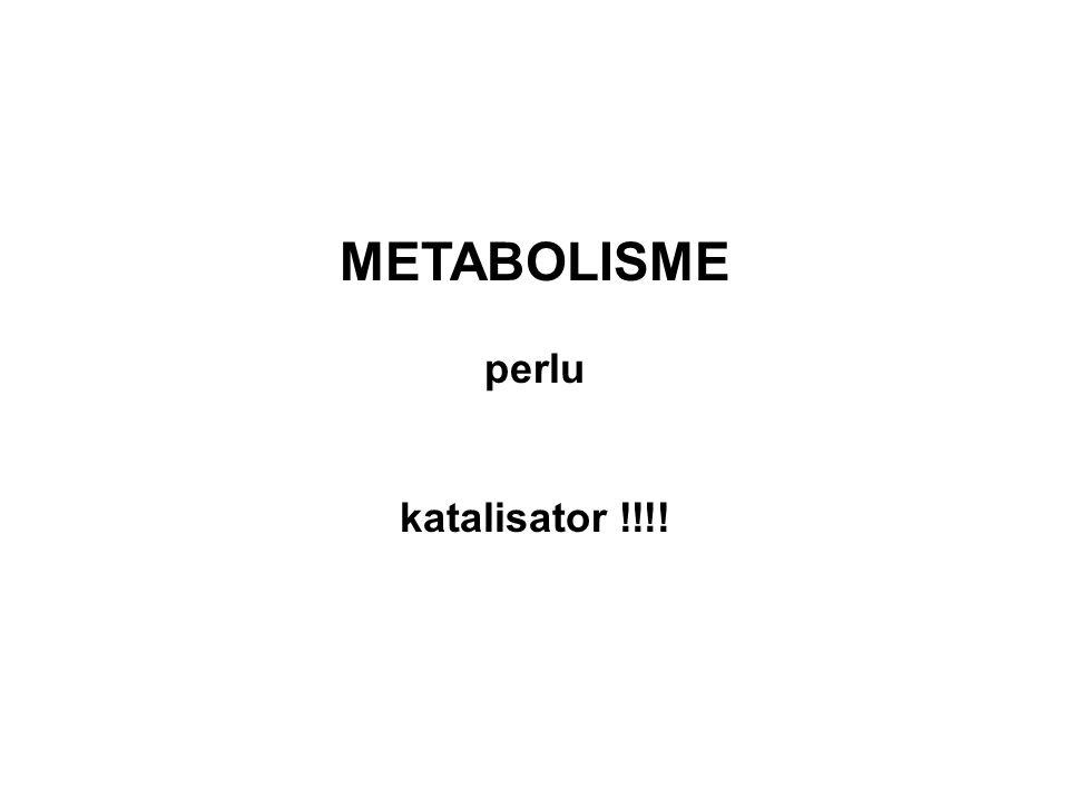 METABOLISME perlu katalisator !!!!