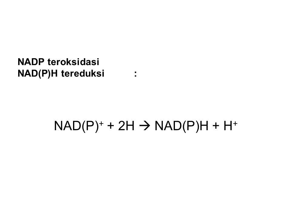 NAD(P)+ + 2H  NAD(P)H + H+