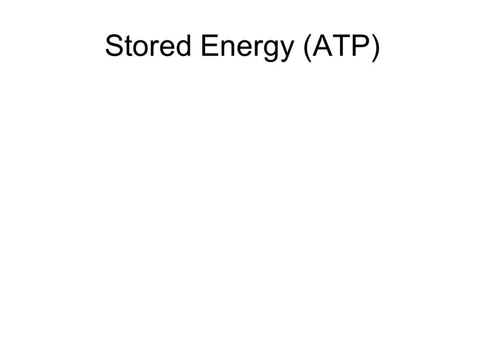 Stored Energy (ATP)