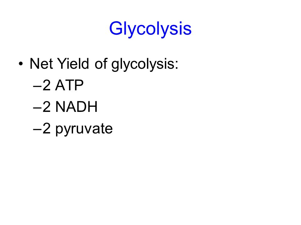 Glycolysis Net Yield of glycolysis: 2 ATP 2 NADH 2 pyruvate