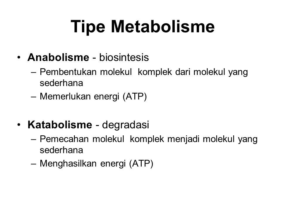 Tipe Metabolisme Anabolisme - biosintesis Katabolisme - degradasi