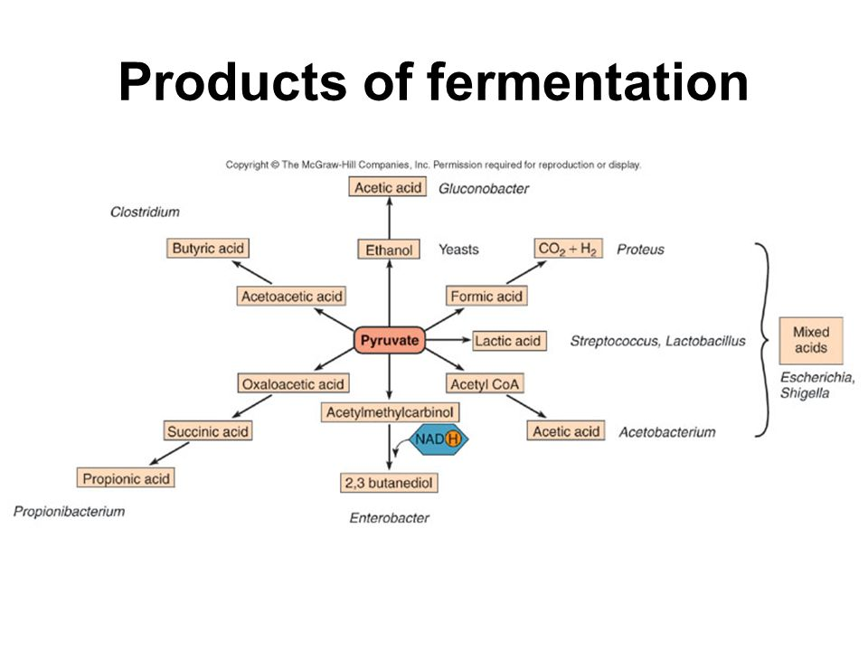 Products of fermentation