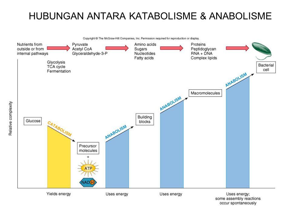 HUBUNGAN ANTARA KATABOLISME & ANABOLISME