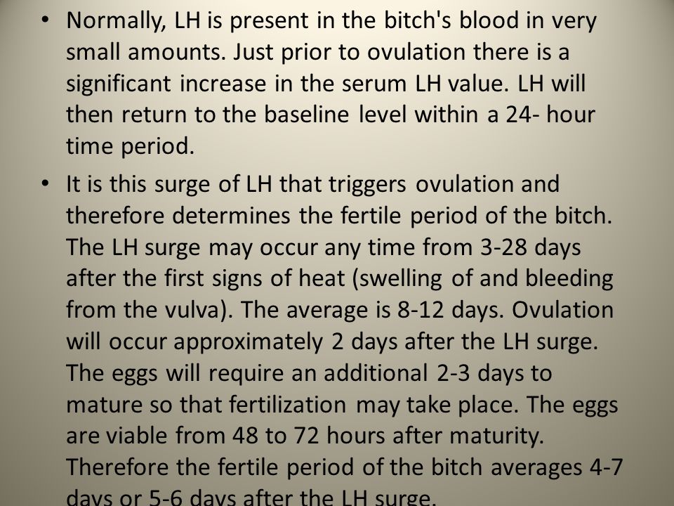 Normally, LH is present in the bitch s blood in very small amounts