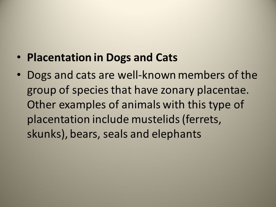 Placentation in Dogs and Cats