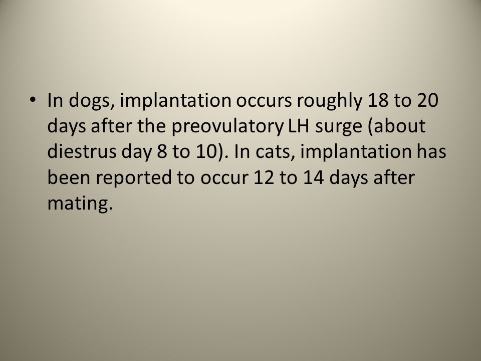 In dogs, implantation occurs roughly 18 to 20 days after the preovulatory LH surge (about diestrus day 8 to 10).