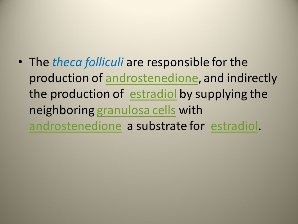 The theca folliculi are responsible for the production of androstenedione, and indirectly the production of estradiol by supplying the neighboring granulosa cells with androstenedione a substrate for estradiol.