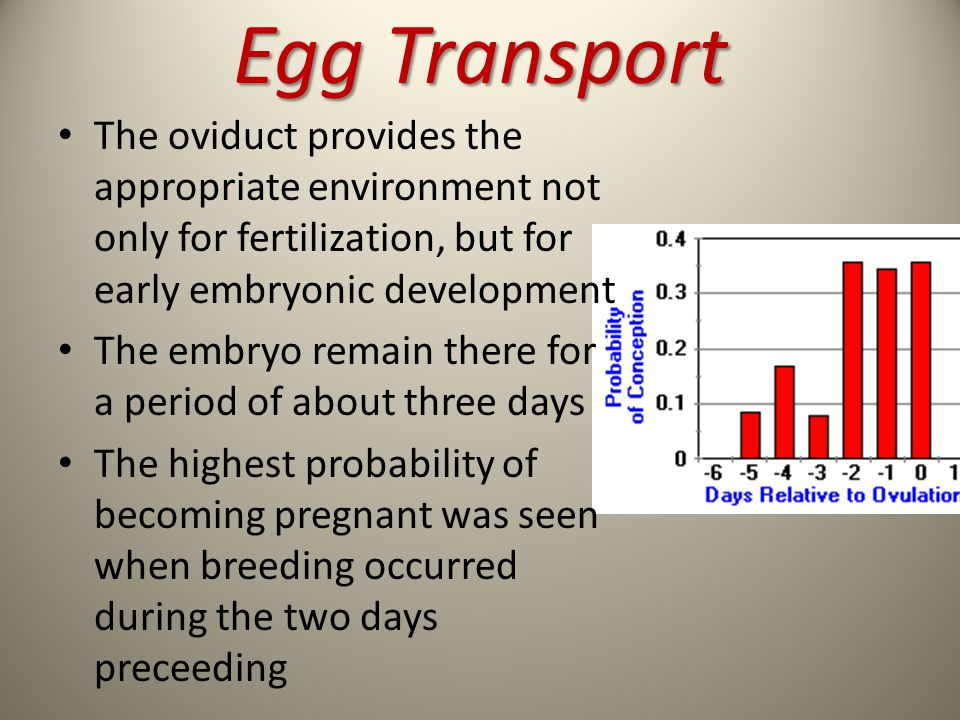 Egg Transport The oviduct provides the appropriate environment not only for fertilization, but for early embryonic development.