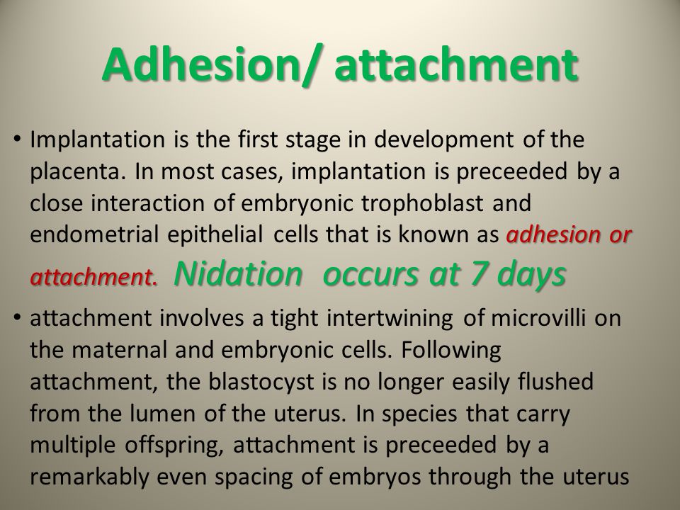 Adhesion/ attachment