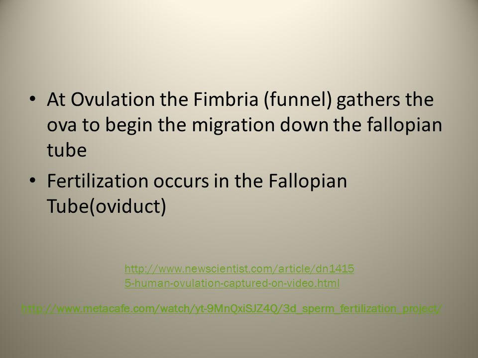 Fertilization occurs in the Fallopian Tube(oviduct)