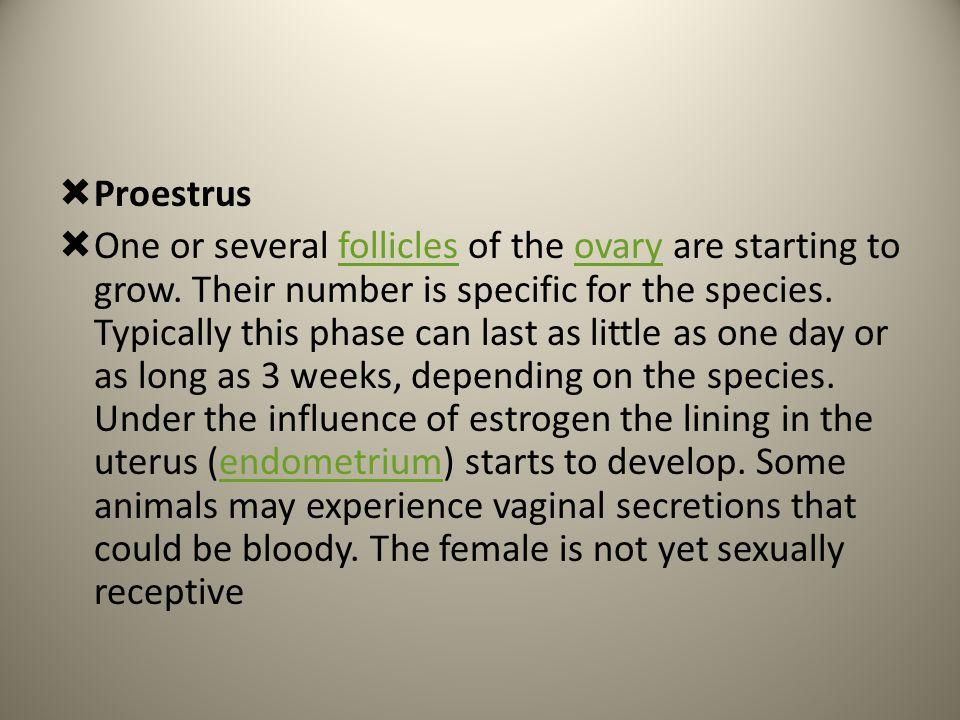 Proestrus