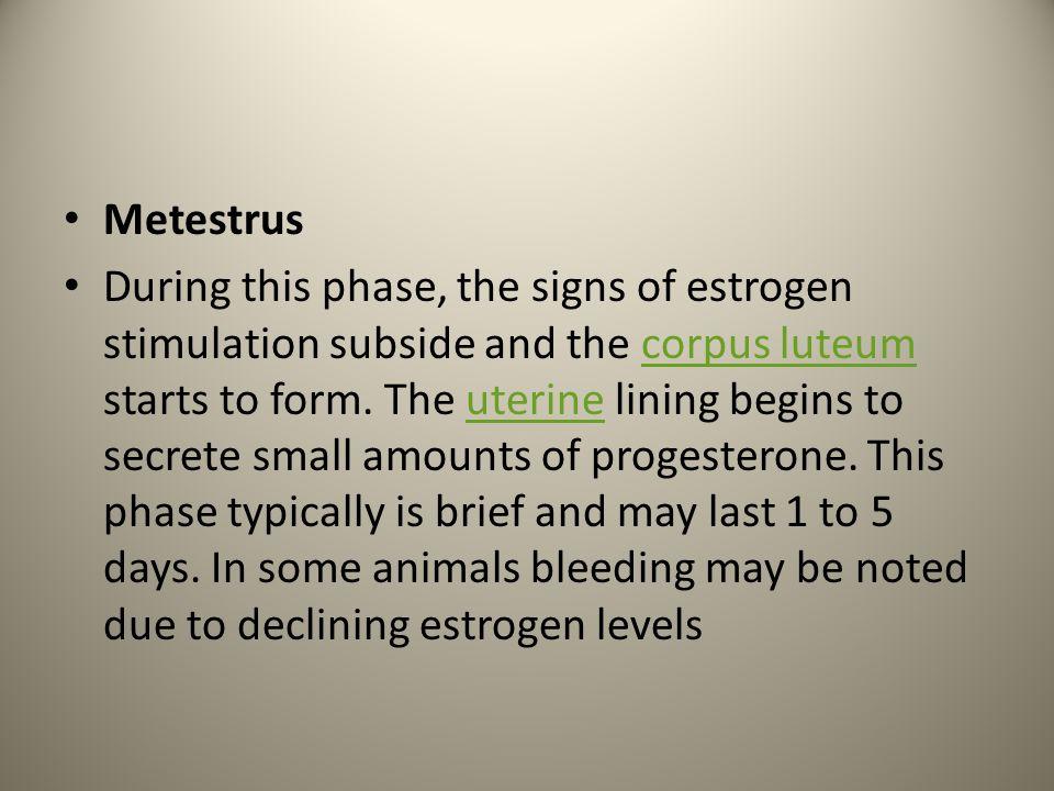 Metestrus