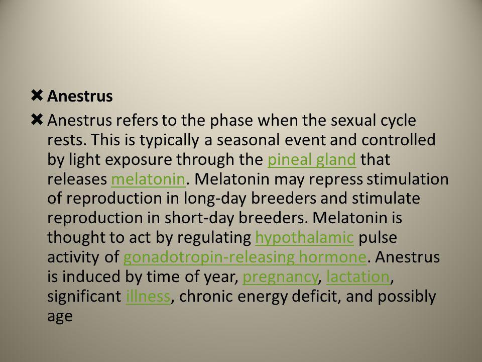 Anestrus