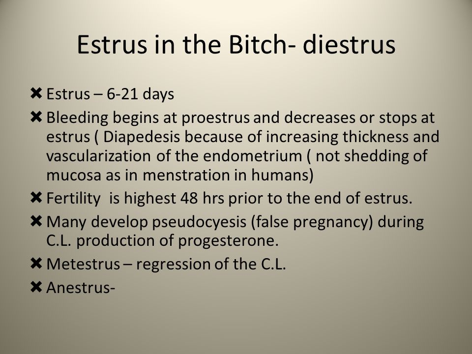 Estrus in the Bitch- diestrus
