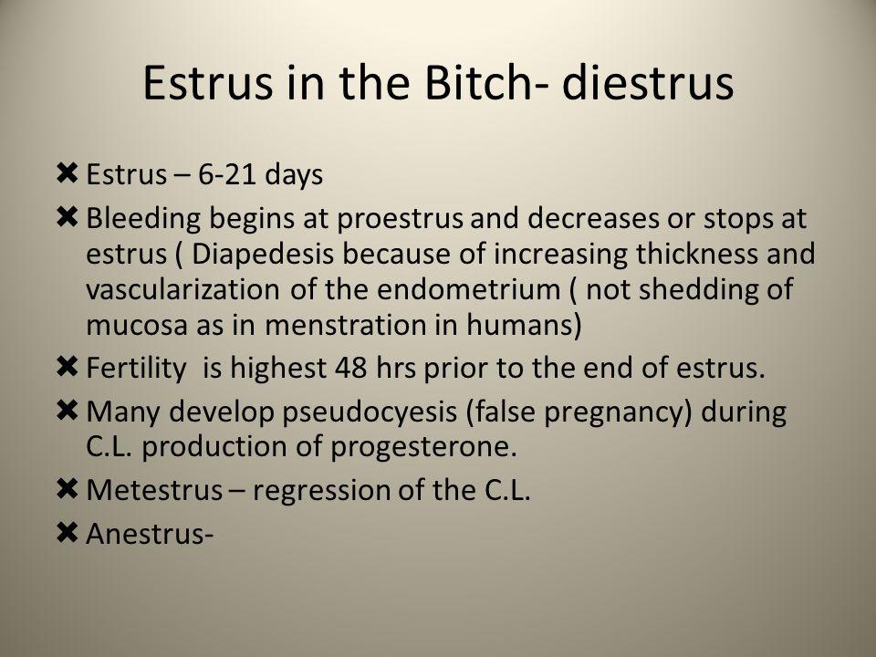 Estrus in the Bitch- diestrus