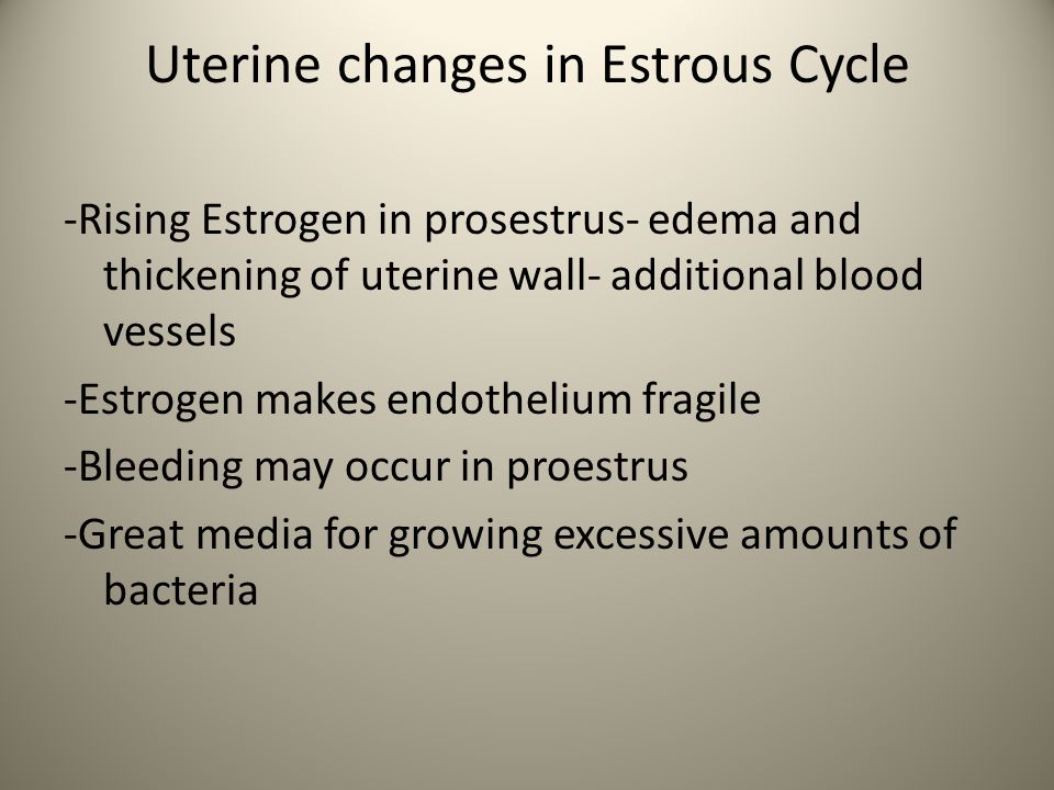 Uterine changes in Estrous Cycle