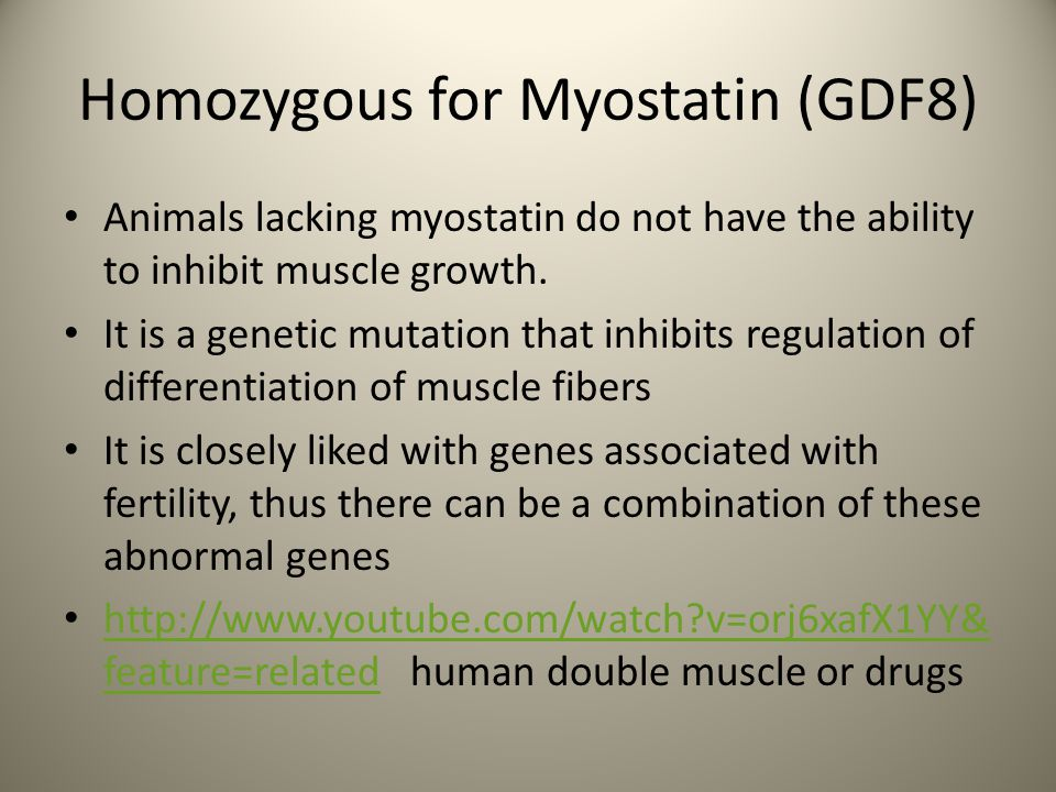 Homozygous for Myostatin (GDF8)