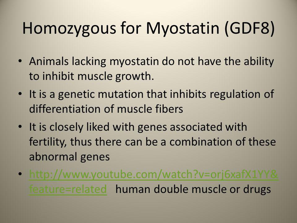 Homozygous for Myostatin (GDF8)