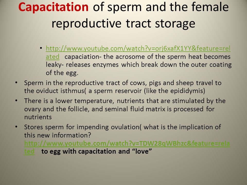 Capacitation of sperm and the female reproductive tract storage