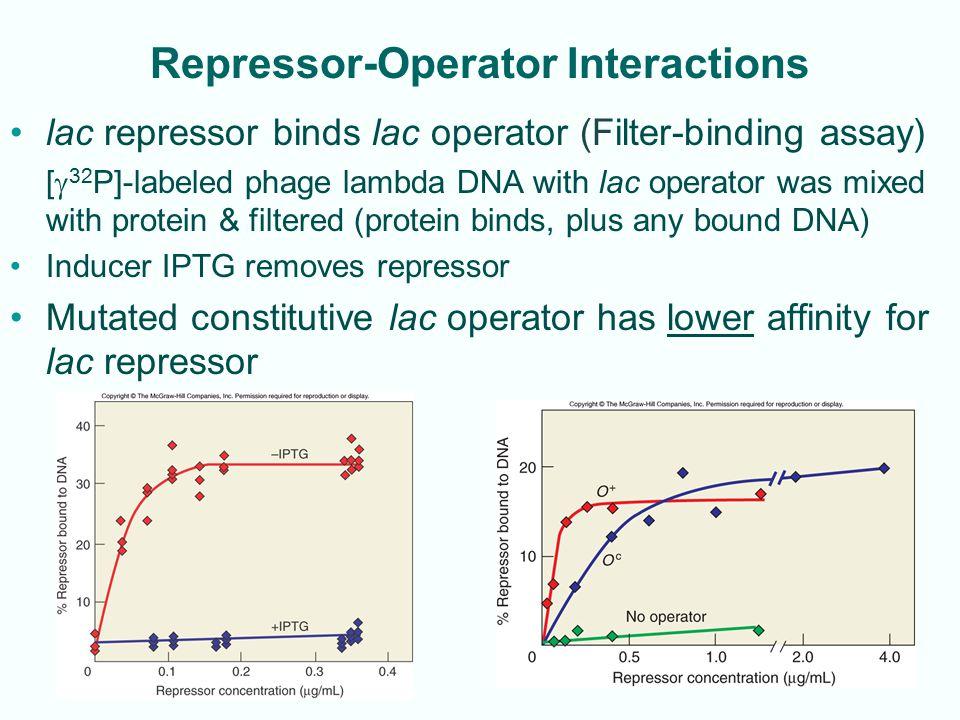Repressor-Operator Interactions