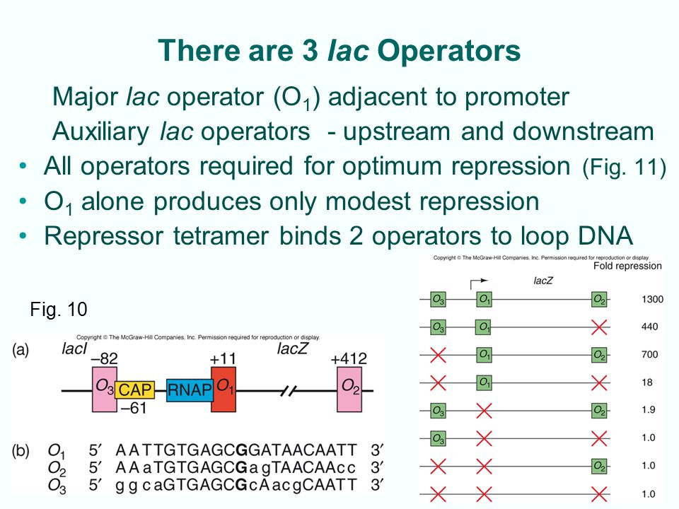 There are 3 lac Operators