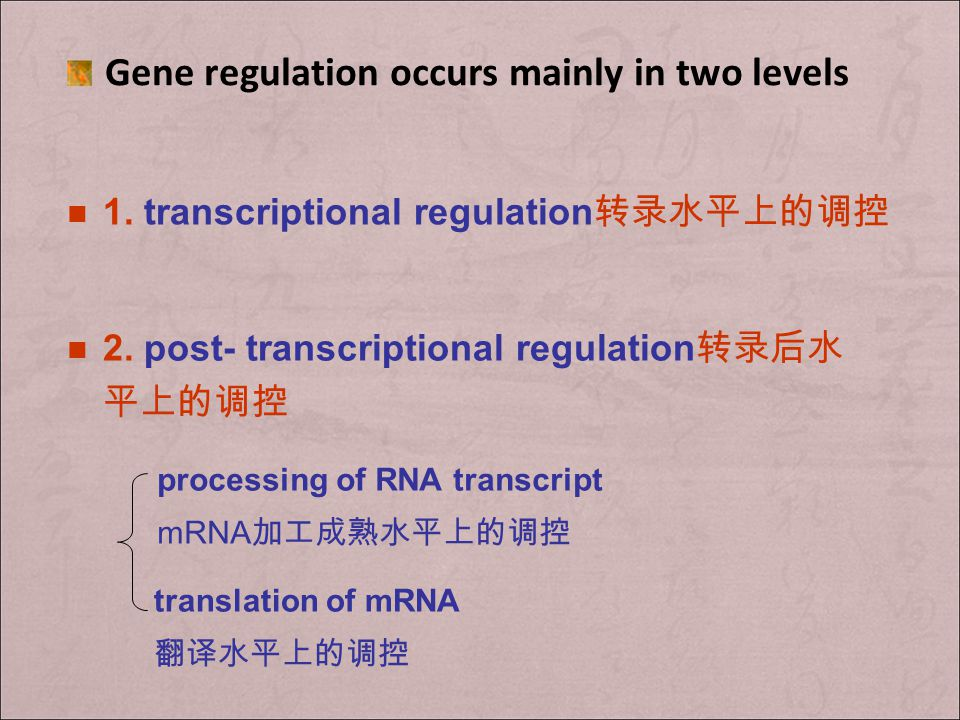 Gene regulation occurs mainly in two levels