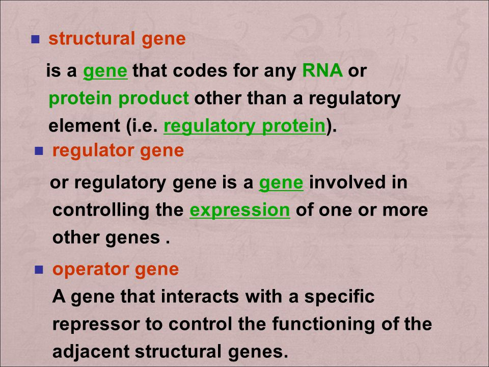 structural gene is a gene that codes for any RNA or protein product other than a regulatory element (i.e. regulatory protein).