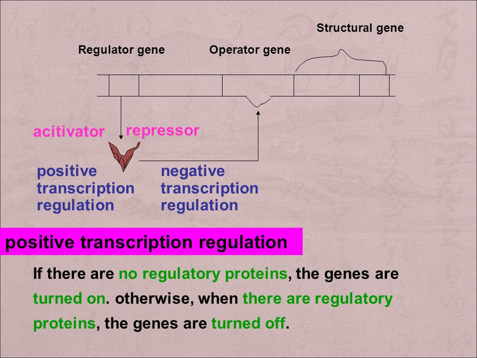 positive transcription regulation