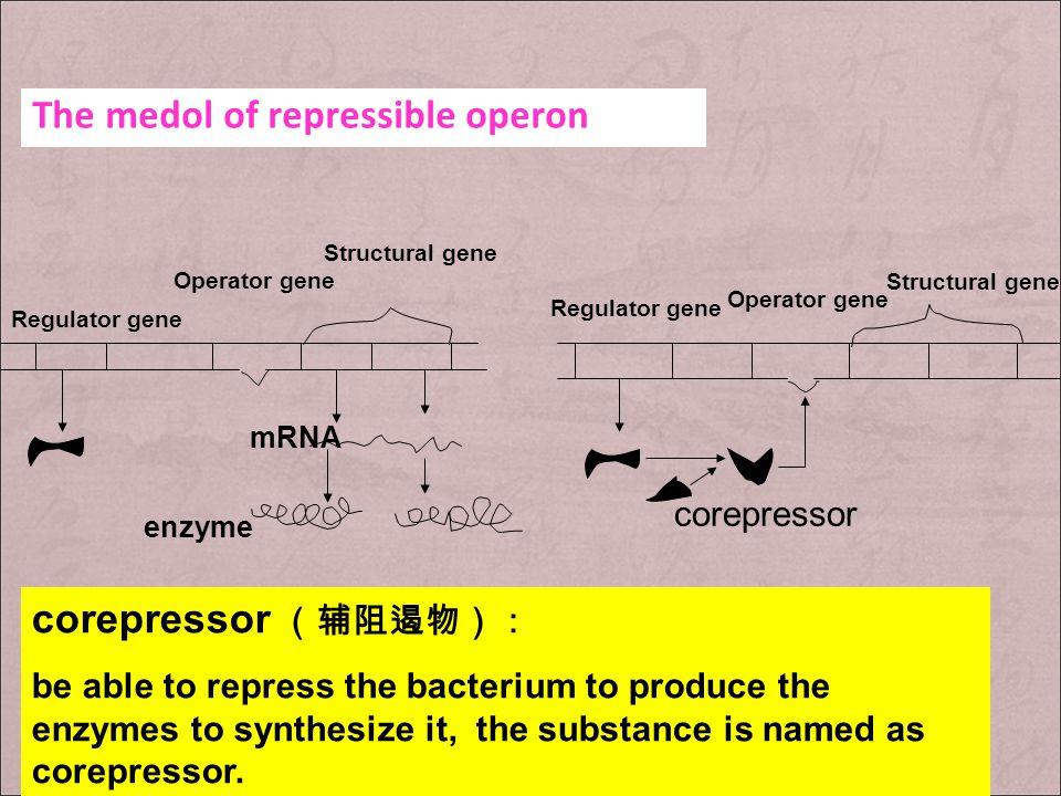 The medol of repressible operon