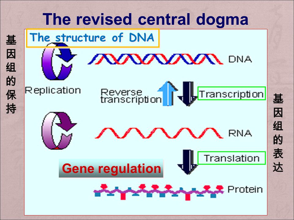 The revised central dogma