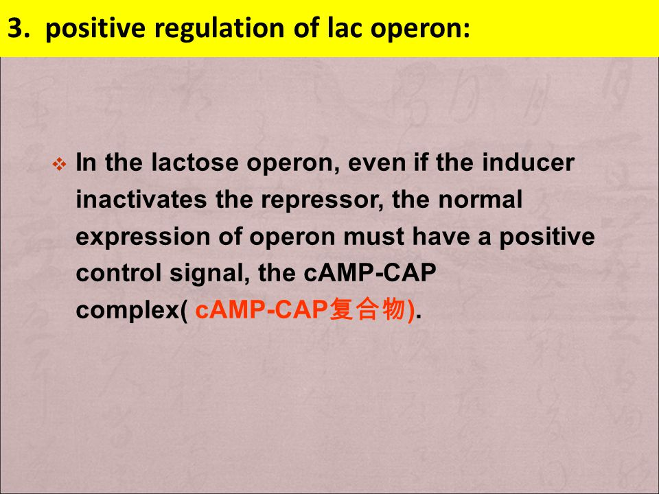 3. positive regulation of lac operon: