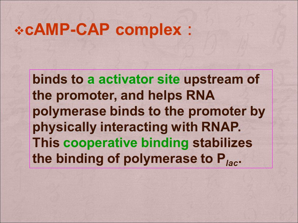 cAMP-CAP complex:
