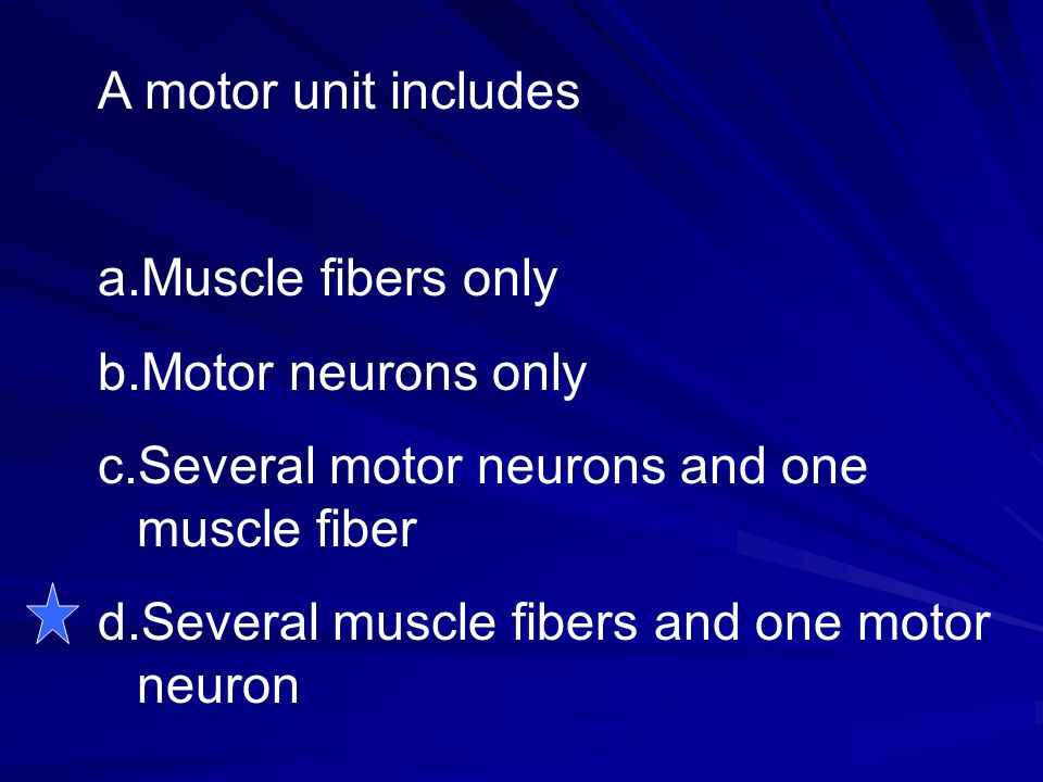 A motor unit includes Muscle fibers only. Motor neurons only. Several motor neurons and one muscle fiber.
