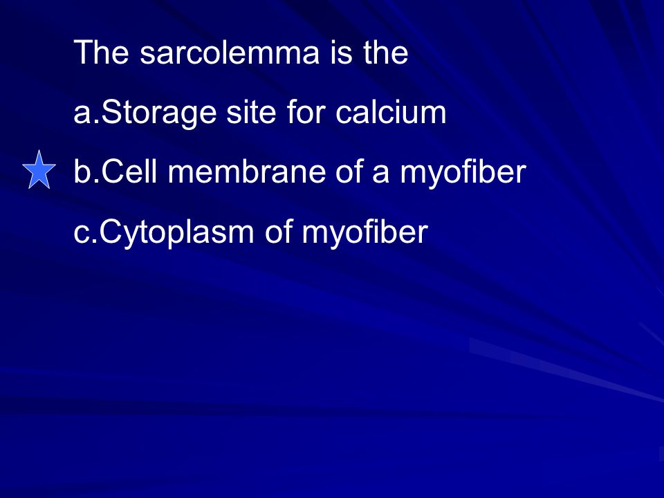The sarcolemma is the Storage site for calcium Cell membrane of a myofiber Cytoplasm of myofiber