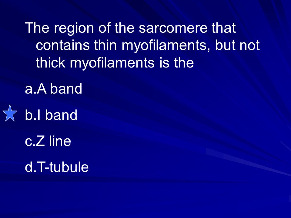 The region of the sarcomere that contains thin myofilaments, but not thick myofilaments is the