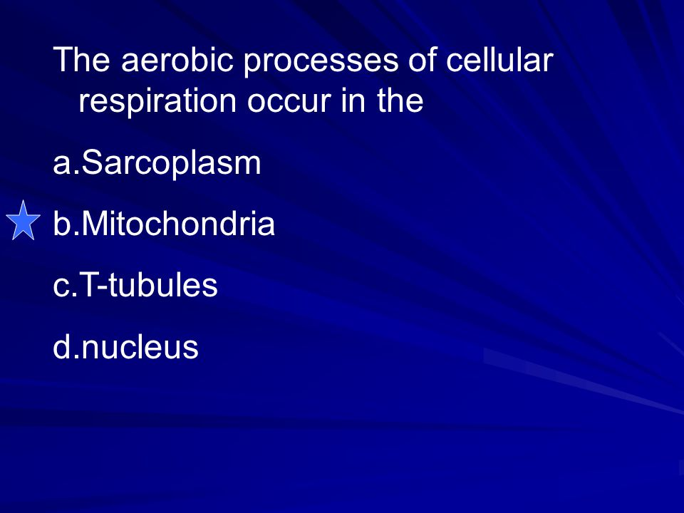 The aerobic processes of cellular respiration occur in the