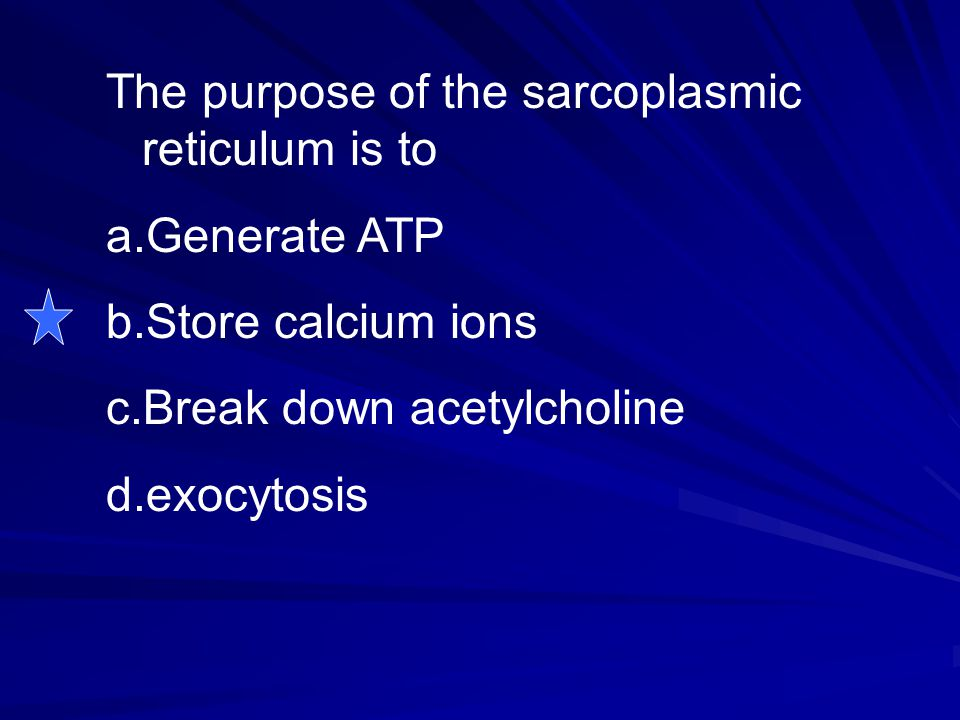 The purpose of the sarcoplasmic reticulum is to