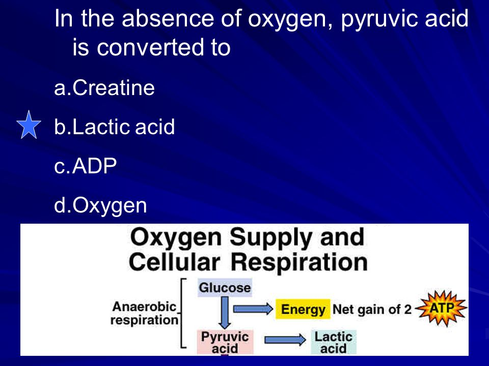 In the absence of oxygen, pyruvic acid is converted to