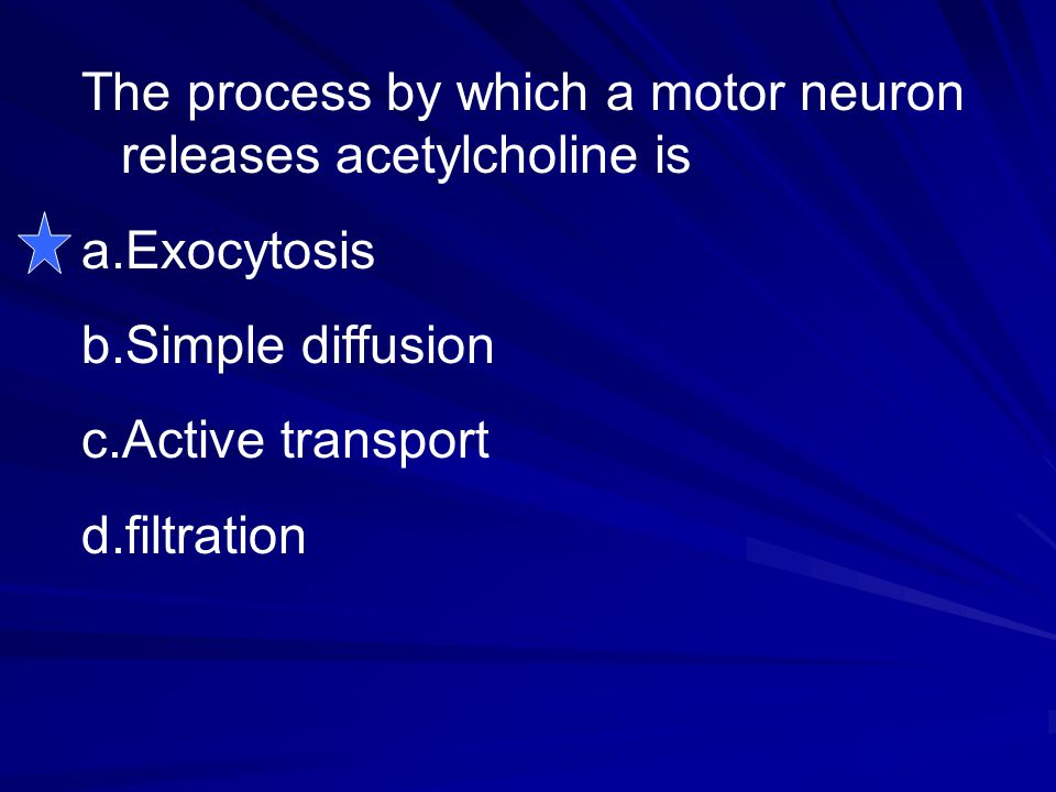 The process by which a motor neuron releases acetylcholine is