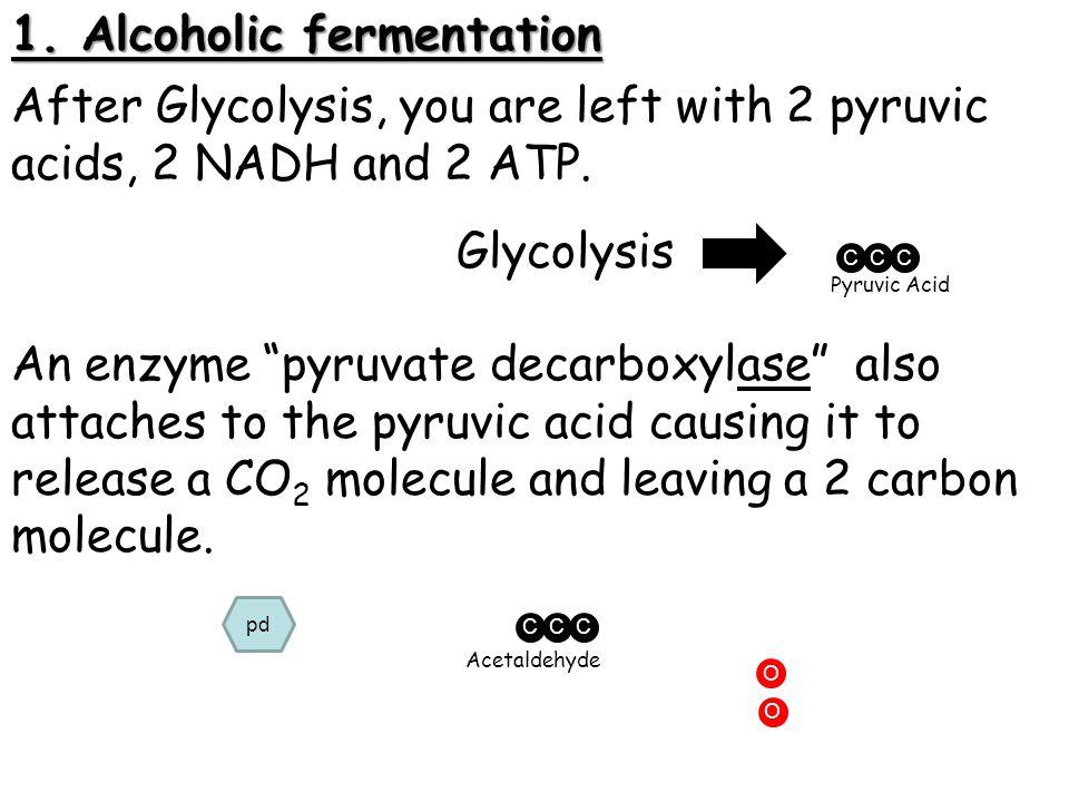 1. Alcoholic fermentation
